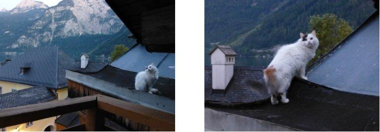 オーストリア編(59):ゴーザウ湖(13.8)_c0051620_634740.jpg