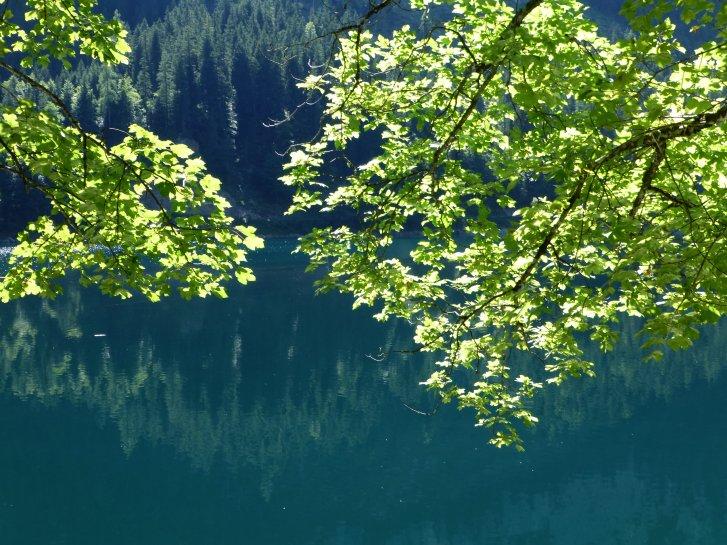 オーストリア編(59):ゴーザウ湖(13.8)_c0051620_6353721.jpg