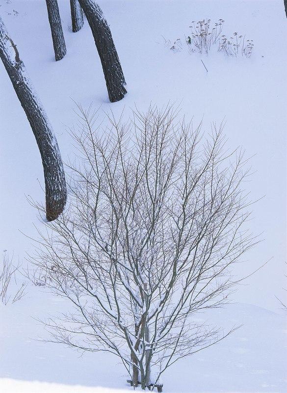 冬の撮影ワークショップ開催 東京・銀座_f0050534_15561205.jpg