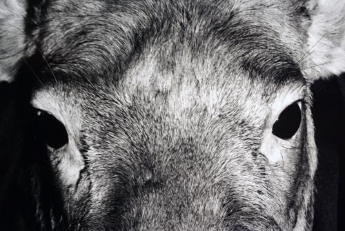 sophie ×  兒嶌秀憲 二人展 アンドロイドは電気羊の夢を見るのか?三日目です。_e0158242_1382585.jpg