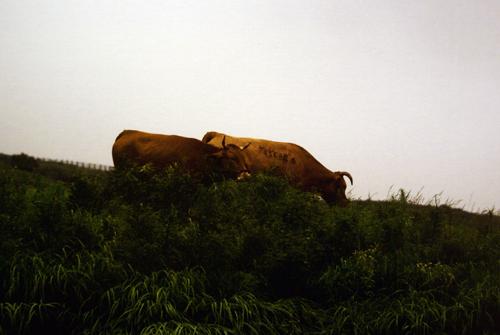 sophie ×  兒嶌秀憲 二人展 アンドロイドは電気羊の夢を見るのか?三日目です。_e0158242_1383590.jpg