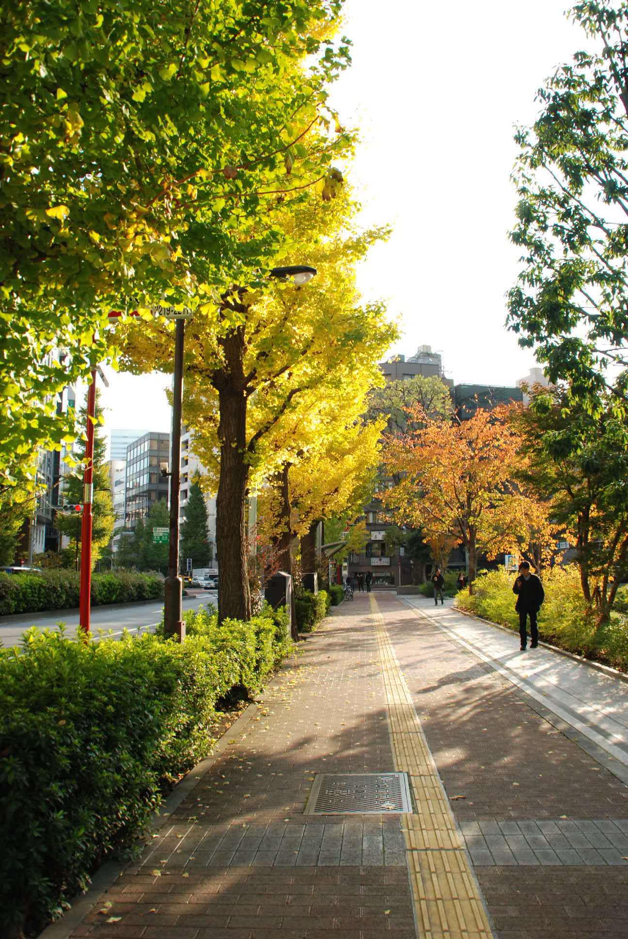 2014/11/23 銀杏_b0112648_0132512.jpg