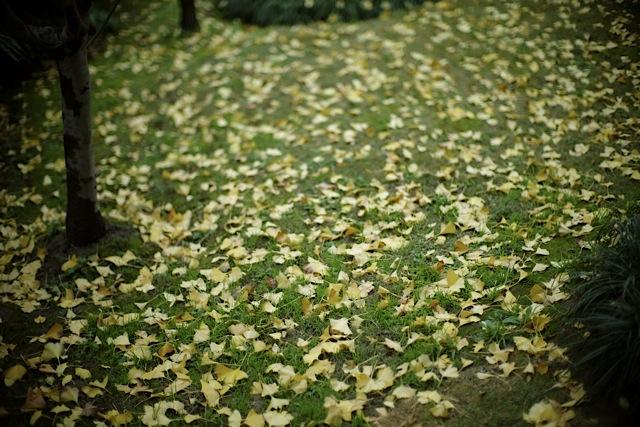 It turns 秋から冬へ..._f0057849_14425580.jpg
