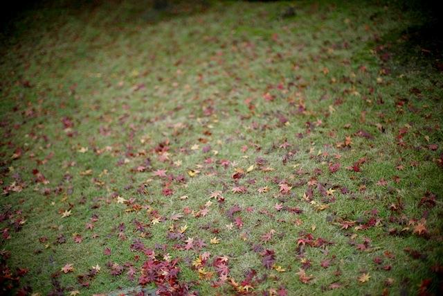 It turns 秋から冬へ..._f0057849_1443481.jpg