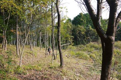 原木しいたけ 2年後の収穫へ向け、原木の伐採 その1_a0254656_1827533.jpg