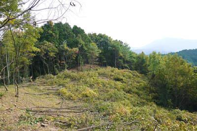 原木しいたけ 2年後の収穫へ向け、原木の伐採 その1_a0254656_1832324.jpg