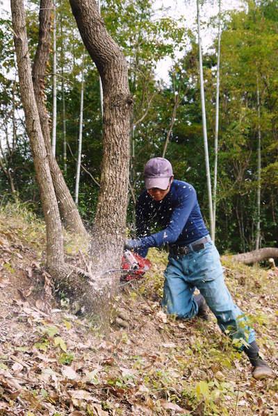原木しいたけ 2年後の収穫へ向け、原木の伐採 その1_a0254656_1854756.jpg