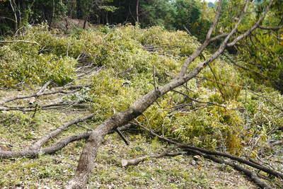 原木しいたけ 2年後の収穫へ向け、原木の伐採 その1_a0254656_194087.jpg