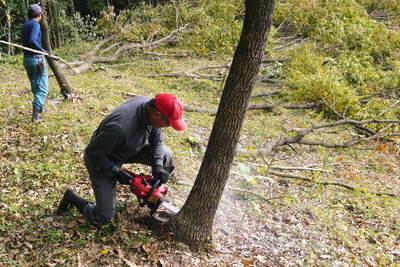 原木しいたけ 2年後の収穫へ向け、原木の伐採 その1_a0254656_1952088.jpg