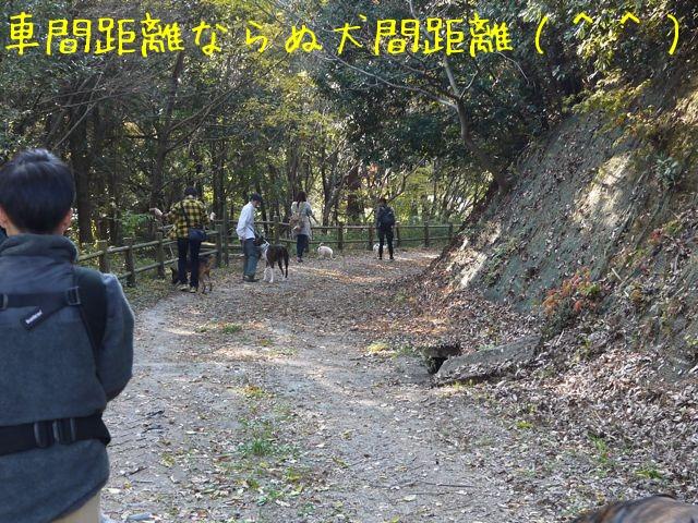f0177261_7233139.jpg
