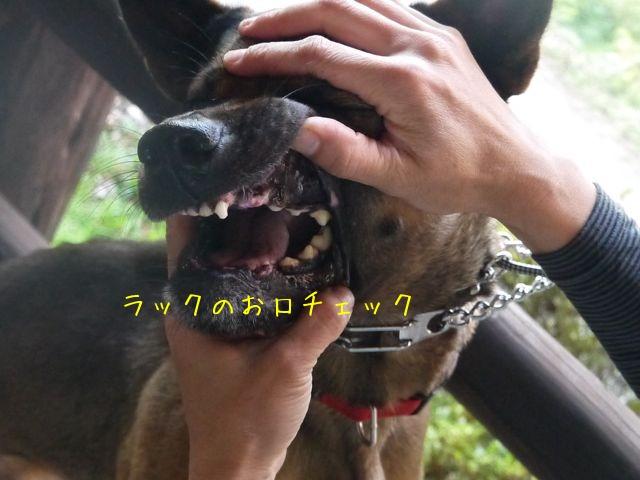 f0177261_7561194.jpg