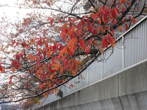 連休に神田川方面へ_c0249569_12354812.jpg