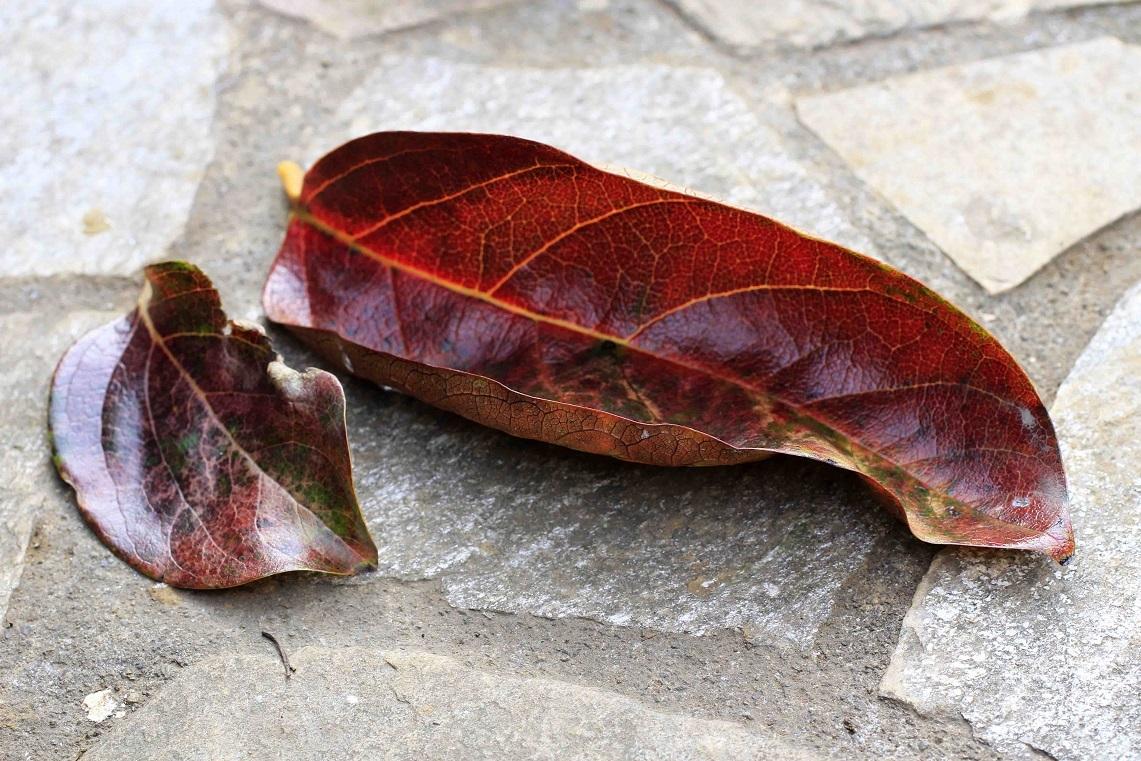 つれづれなるまま(支離滅裂) ~常緑樹と落葉樹~_a0107574_16502903.jpg