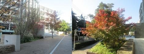 紅葉と白根記念渋谷区郷土博物館・文学館の展示会_d0183174_08465711.jpg