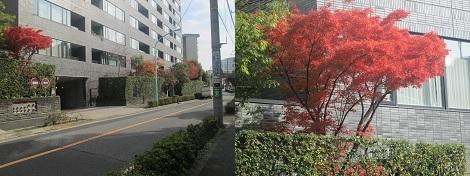 紅葉と白根記念渋谷区郷土博物館・文学館の展示会_d0183174_08471926.jpg