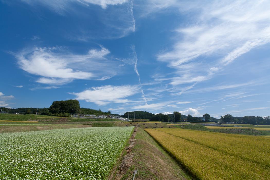 蕎麦の花とブルースカイ_c0137403_14583043.jpg
