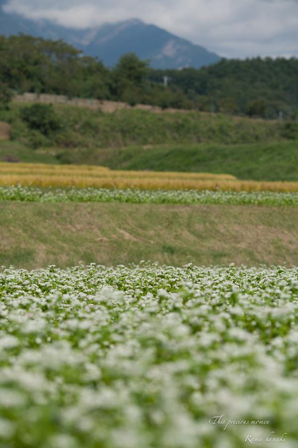 蕎麦の花とブルースカイ_c0137403_16542297.jpg