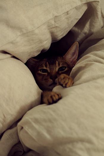 [猫的]元気?_e0090124_0321350.jpg