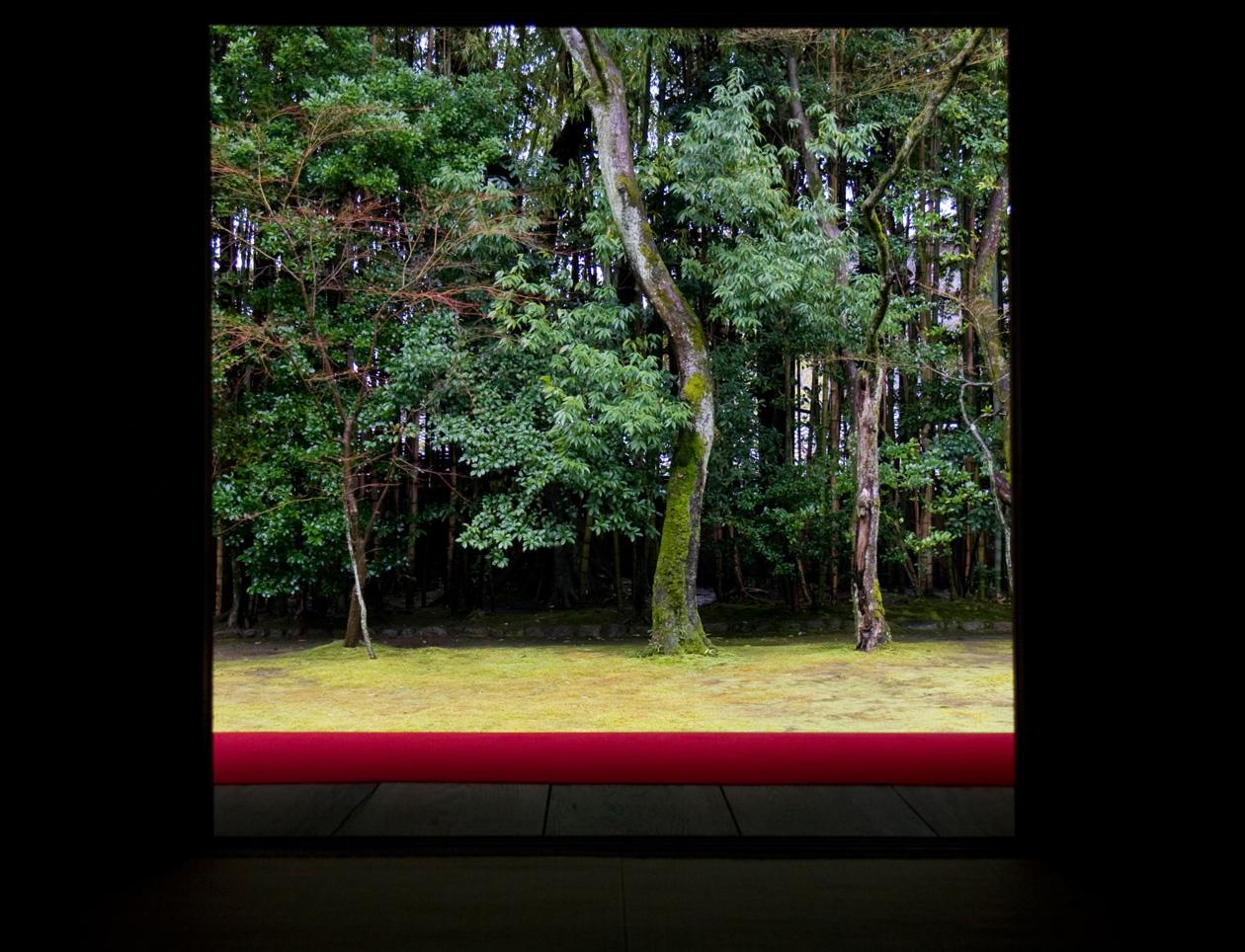 冬の京都 大徳寺 高桐院 楓と苔 _e0127948_1524185.jpg