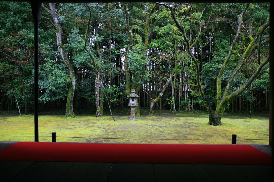 冬の京都 大徳寺 高桐院 楓と苔 _e0127948_1532557.jpg