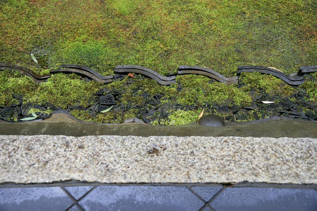 冬の京都 大徳寺 高桐院 楓と苔 _e0127948_1534033.jpg