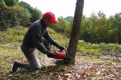 原木しいたけ 2年後の収穫へ向け、原木の伐採 その2_a0254656_144314.jpg