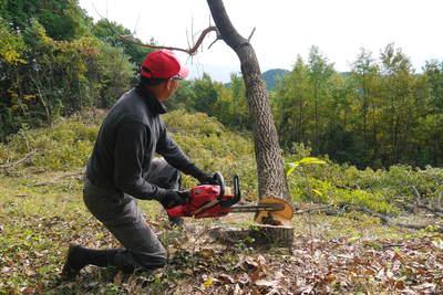 原木しいたけ 2年後の収穫へ向け、原木の伐採 その2_a0254656_1446995.jpg
