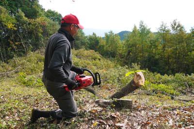 原木しいたけ 2年後の収穫へ向け、原木の伐採 その2_a0254656_16511945.jpg