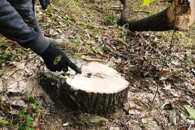 原木しいたけ 2年後の収穫へ向け、原木の伐採 その2_a0254656_1725367.jpg