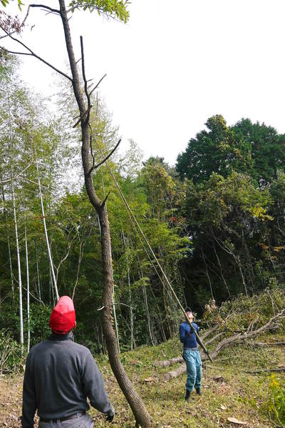 原木しいたけ 2年後の収穫へ向け、原木の伐採 その2_a0254656_17352733.jpg