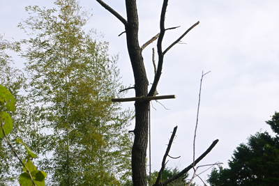 原木しいたけ 2年後の収穫へ向け、原木の伐採 その2_a0254656_17414766.jpg