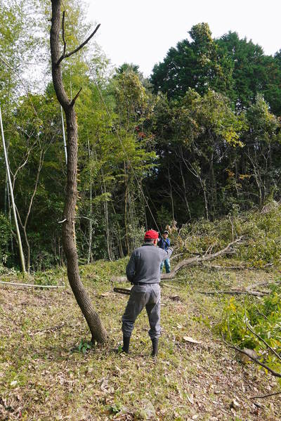 原木しいたけ 2年後の収穫へ向け、原木の伐採 その2_a0254656_17572869.jpg