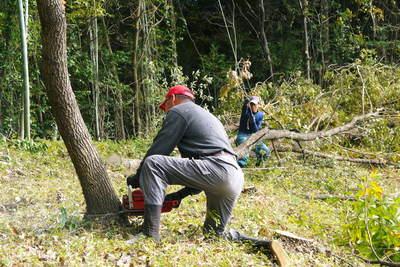 原木しいたけ 2年後の収穫へ向け、原木の伐採 その2_a0254656_18142548.jpg