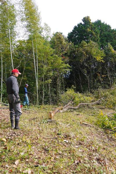 原木しいたけ 2年後の収穫へ向け、原木の伐採 その2_a0254656_18213476.jpg