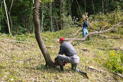 原木しいたけ 2年後の収穫へ向け、原木の伐採 その2_a0254656_1892938.jpg
