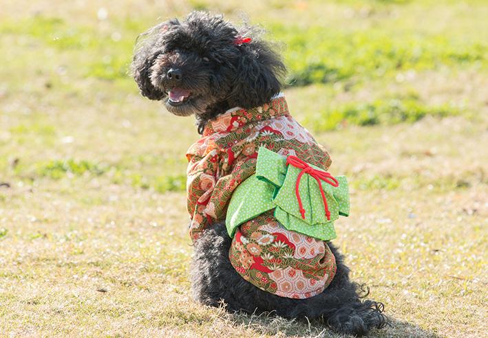 マタニティフォト with Dog !_d0164190_21141042.jpg