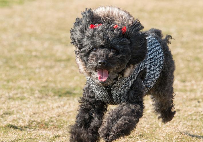 マタニティフォト with Dog !_d0164190_21143079.jpg