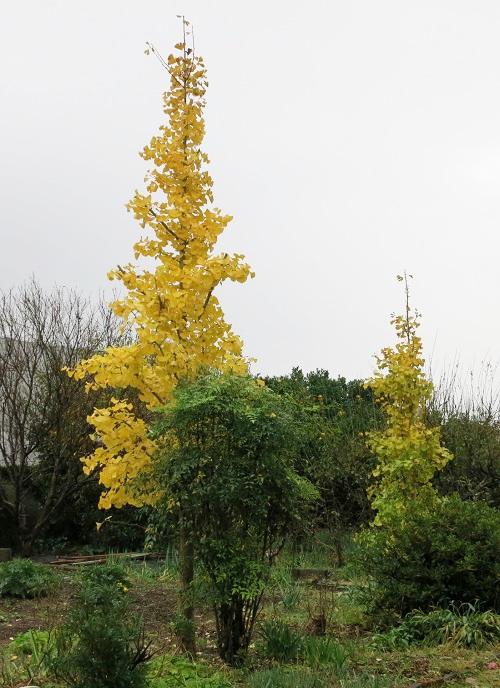 庭も秋らしく_c0119197_1035551.jpg