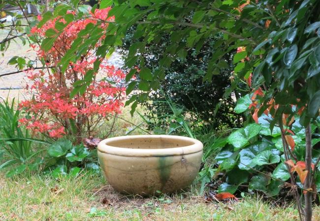 庭も秋らしく_c0119197_109980.jpg