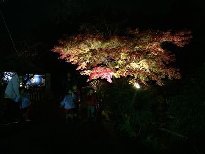 境内園内の紅葉見頃です_b0188106_0475696.jpg