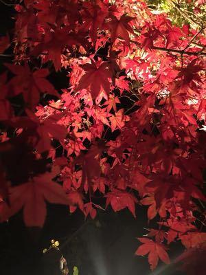 境内園内の紅葉見頃です_b0188106_0475856.jpg