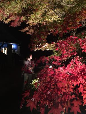 境内園内の紅葉見頃です_b0188106_048089.jpg