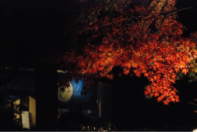 境内園内の紅葉見頃です_b0188106_048134.jpg