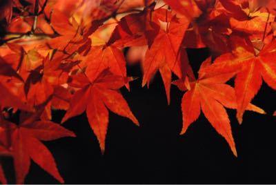 境内園内の紅葉見頃です_b0188106_048463.jpg