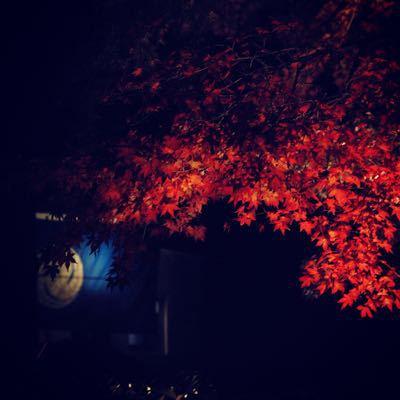 正蓮寺の新しい墓地「はすのさと」_b0188106_23164579.jpg