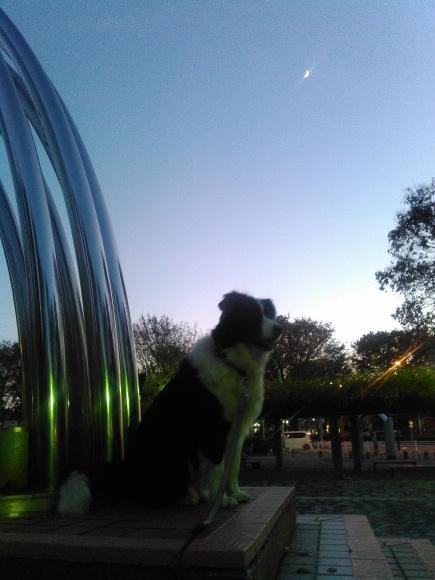 【犬】夕闇に_f0141609_17271786.jpg