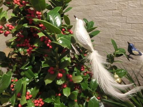 小鳥たちが実をついばみにやって来ました。_b0330312_17441593.jpg