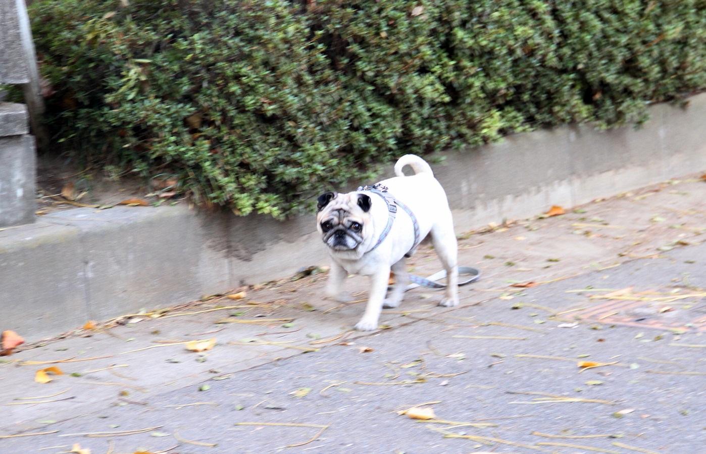 愛犬(ケン太)との散歩での風景と二宮尊徳像_f0239515_23124164.jpg