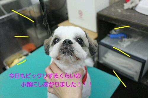 b0130018_0111963.jpg