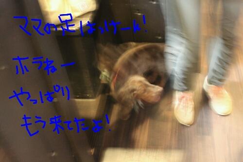 b0130018_13555636.jpg